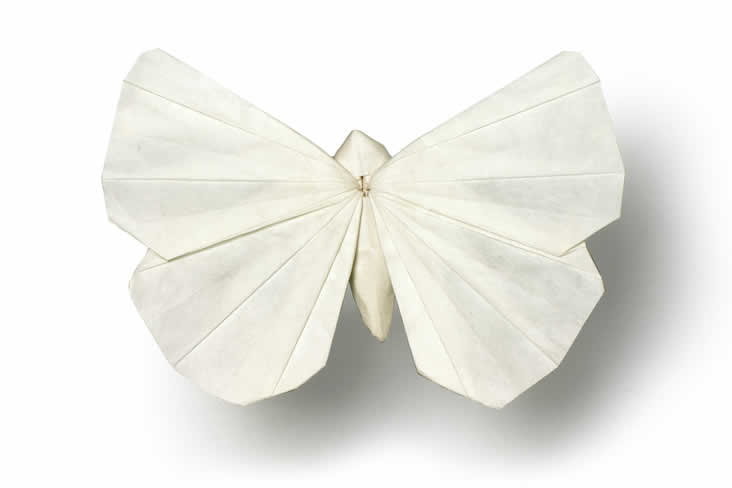 Origami butterfly white photograph